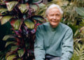 William-Stanley-Merwin